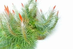 air plant care ultimate guide