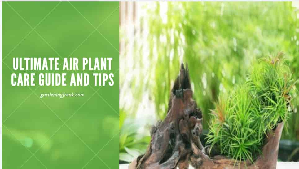 air plant care guide