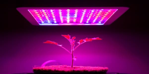 best grow lights for plants