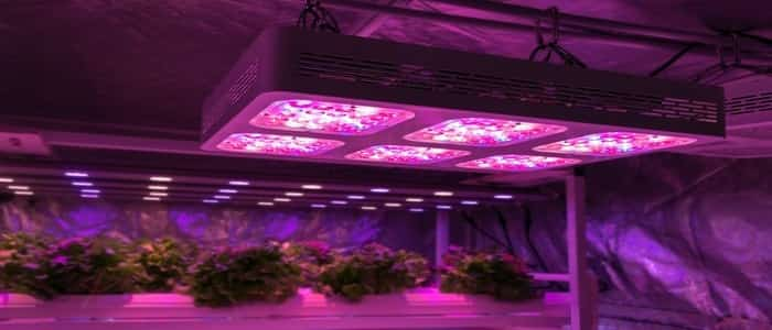 grow light height above plants