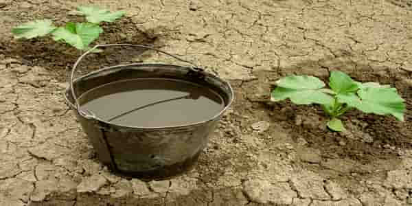 bucket of water inside greenhouse
