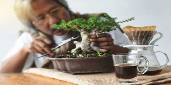 how to take care of bonsai