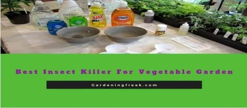 Best insect killer for vegetable garden