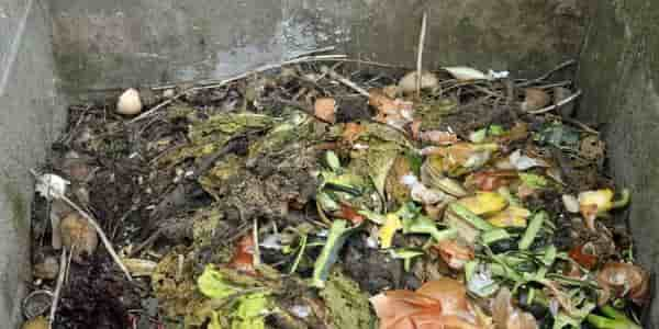 Collect the kitchen waste