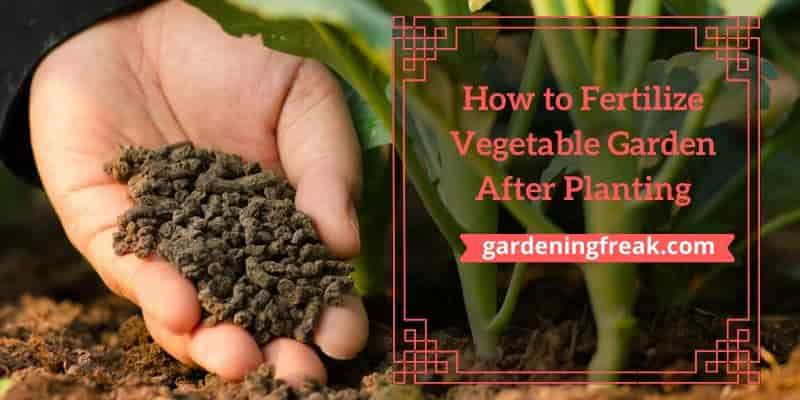 How to Fertilize Vegetable Garden After Planting