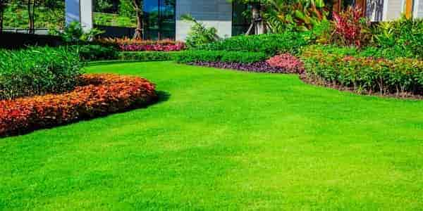 What is the size and layout of your lawn