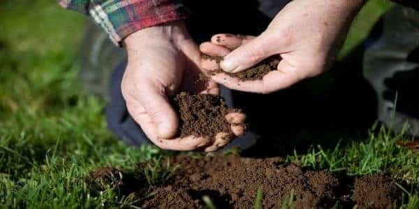 What is the soil type in your home