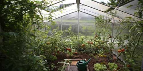 causes of greenhouse effect