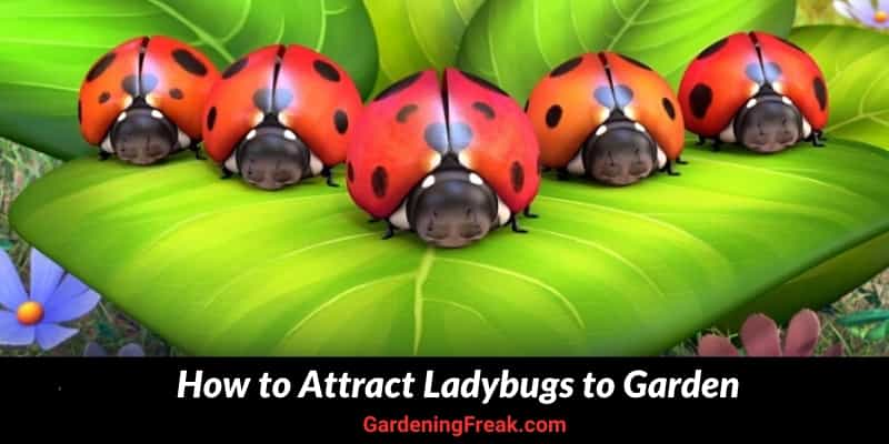 How to Attract Ladybugs to Garden