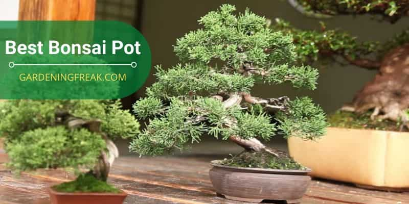 Best Bonsai Pot