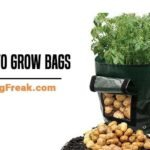 Best Potato Grow Bags