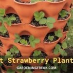 Best Strawberry Planters