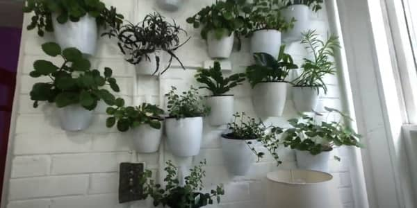 Necessary_features_for_indoor_planter