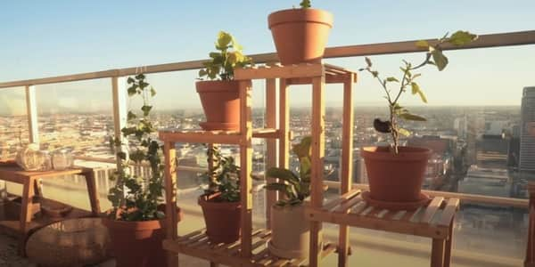 Things to check while purchasing the best balcony planters and railing planters