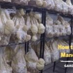 How to Grow Lion's Mane Mushroom