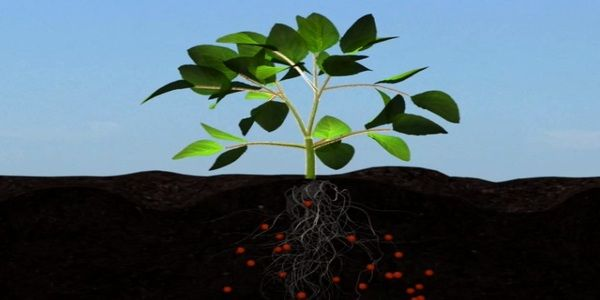 More Nutrients to Crops root