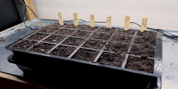 Setting up seeds or plants tray and pots