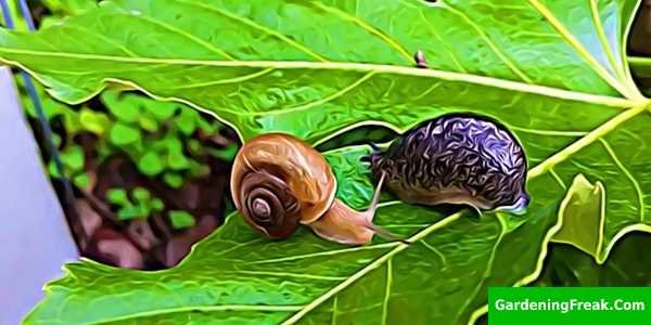 Differences between slugs and snails