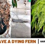 how to save a dying fern